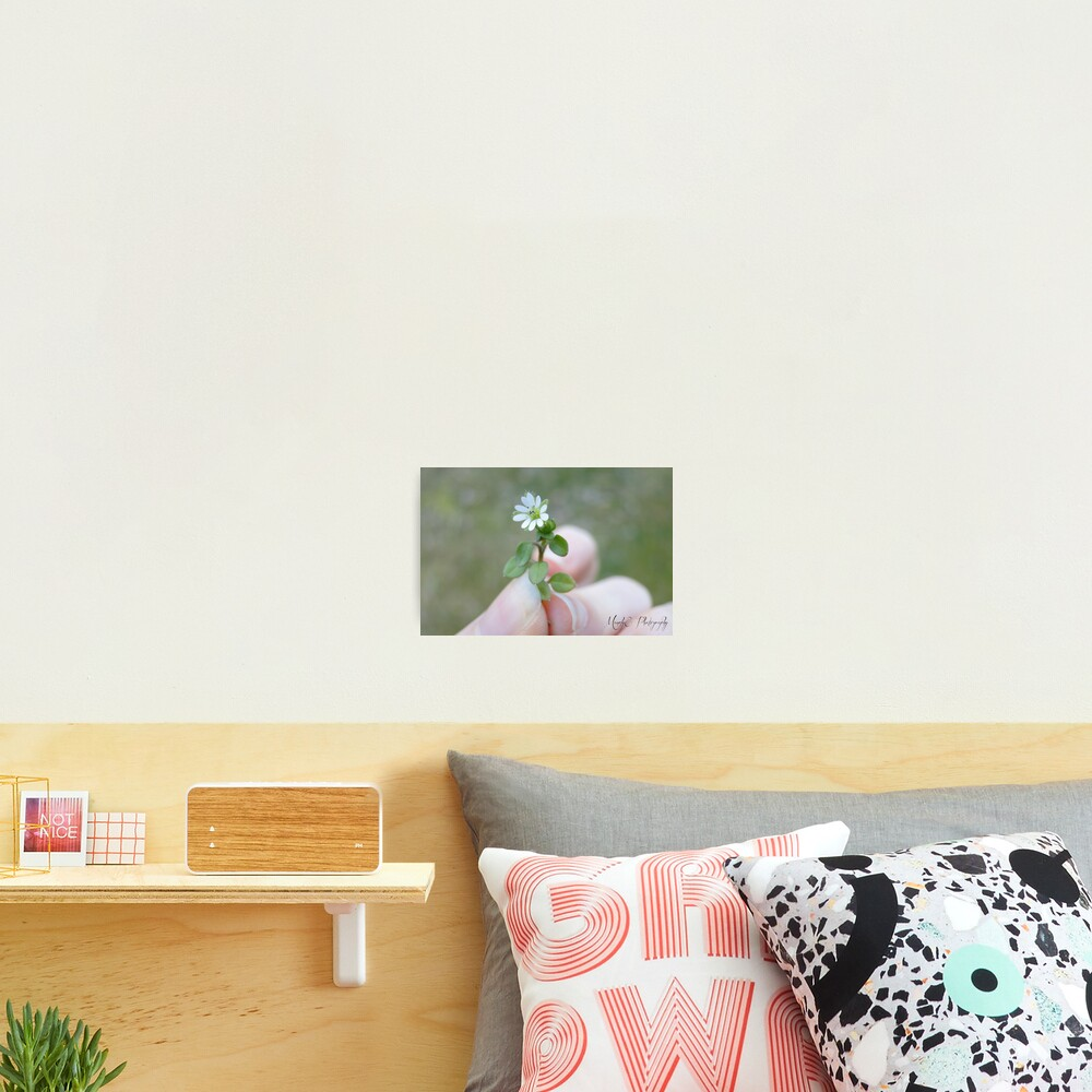 Tiny White Flower Photographic Print