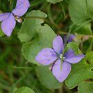 Violets by Br0wnEyedQueen
