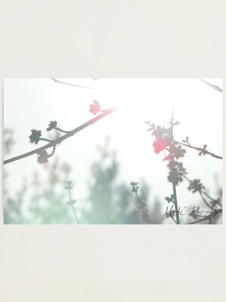 Alternate view of Wonderland #1 Photographic Print