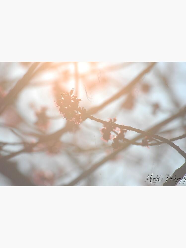 Wonderland #2 by Br0wnEyedQueen
