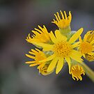 Yellow & Wild by ArkansasLisa