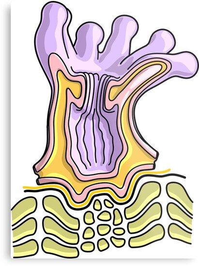 Lienzos metálicos «Diagrama de la anatomía del pólipo de coral ...