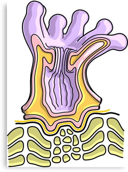 Lienzos «Diagrama de la anatomía del pólipo de coral - Ilustración ...