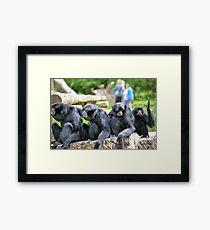 Siamang Gibbon family relaxing in fota wildlife park Framed Print
