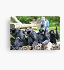 Siamang Gibbon family relaxing in fota wildlife park Canvas Print