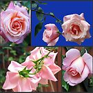 High Hopes - Peach Roses Collage by BlueMoonRose