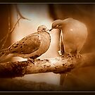 Lovey Dovey in Sepia by Deb  Badt-Covell