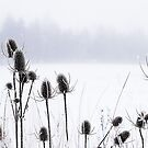 Thistles in the snow by ColourCottage