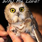 Why me Lord? by Alice Kahn