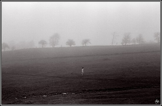 Fields of Joy by Wayne King