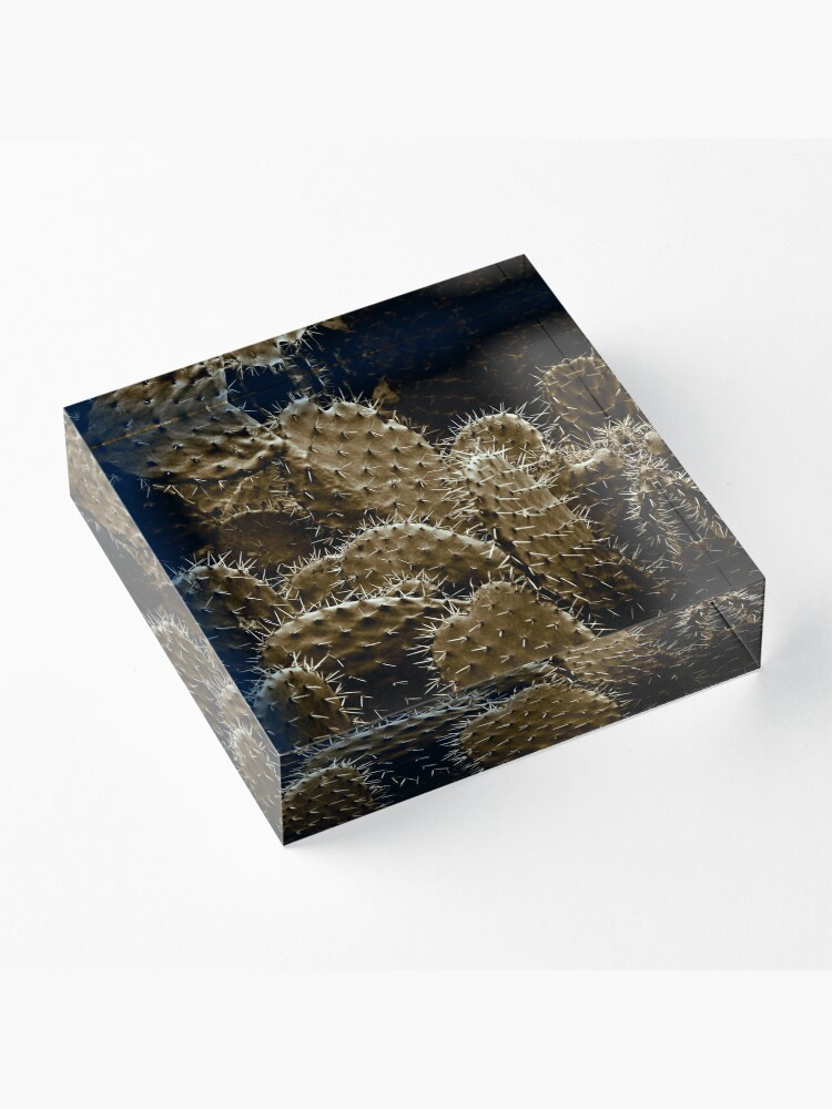 Alternate view of Cactaceae Acrylic Block