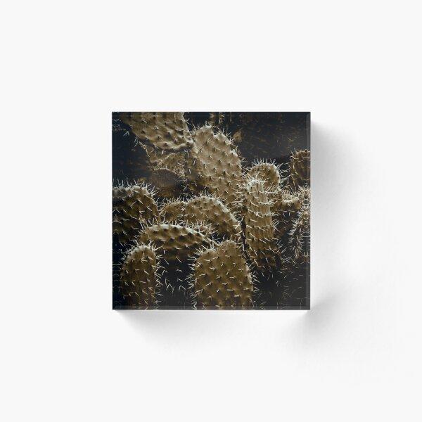 Cactaceae Acrylic Block