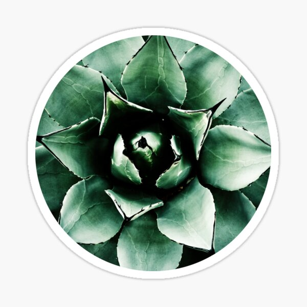 Agave Parryi (Tequila Agave) Sticker