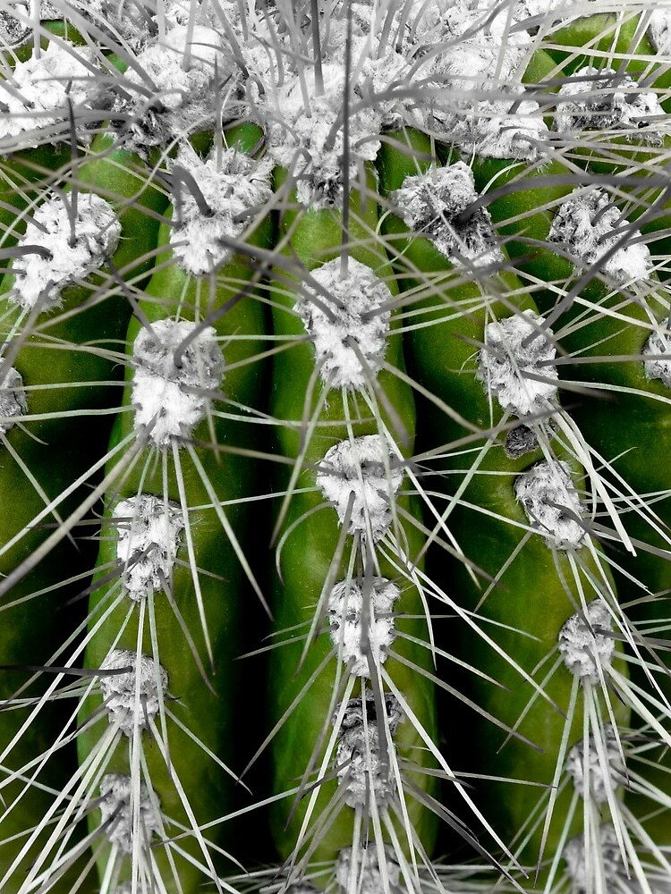 Prickly Cactus by gardenpictures