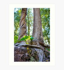 Tree and Roots Art Print
