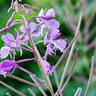 Purple Flower by Britta West