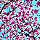 Bright Magnolia Sky 8804 by Candy Paull