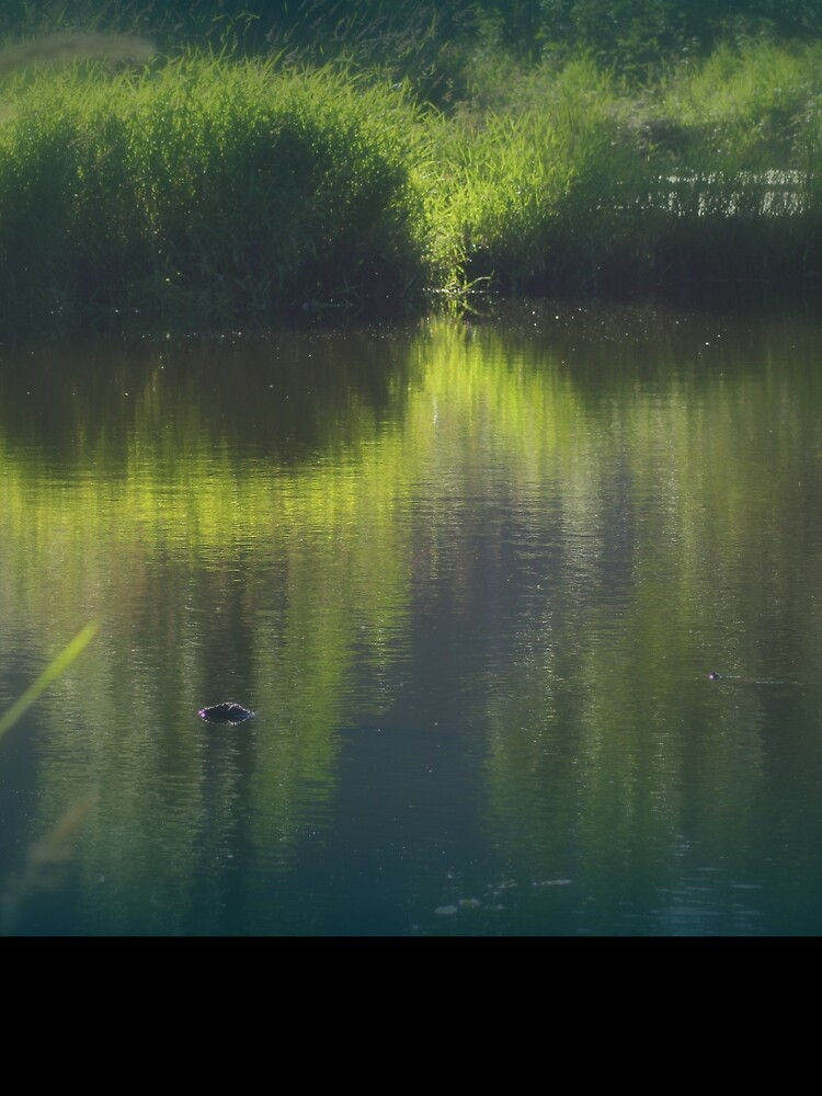 turtle swimming away at Trojan pond, near Goble, Oregon by DlmtleArt