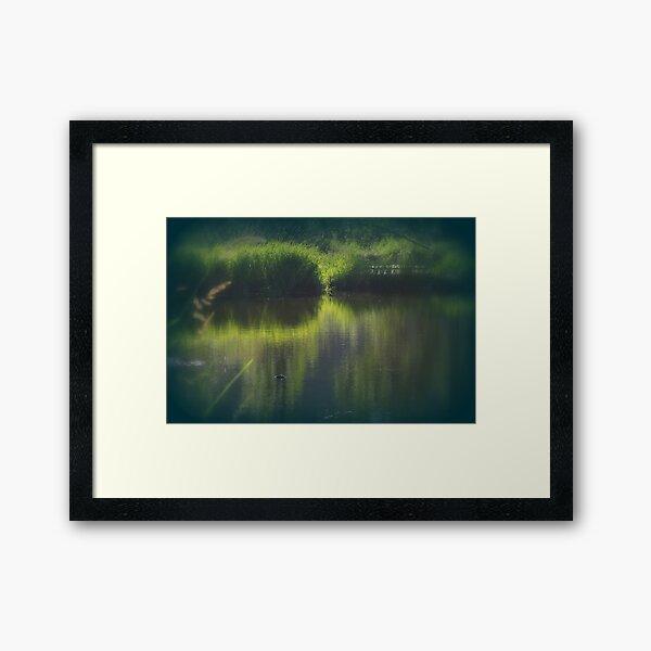 turtle swimming away at Trojan pond, near Goble, Oregon Framed Art Print