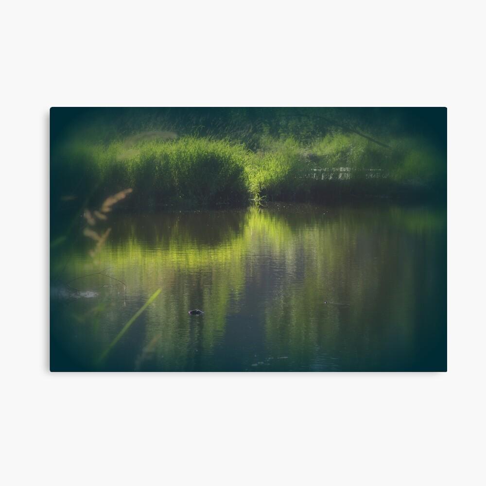 turtle swimming away at Trojan pond, near Goble, Oregon Canvas Print