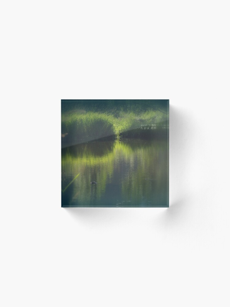 Alternate view of turtle swimming away at Trojan pond, near Goble, Oregon Acrylic Block
