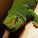 Gecko by villrot