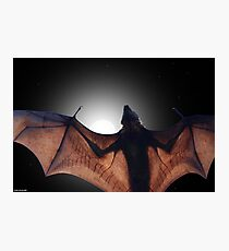 Flying Fox Photographic Print