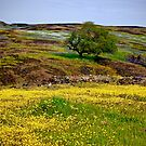 Spring Comes to the Mountain by Barbara  Brown
