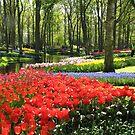 Ein Kaleidoskop der Farben - Keukenhof-Gärten im Frühjahr von BlueMoonRose