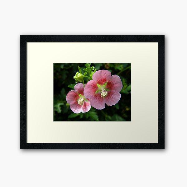 Pink Beauties Framed Art Print