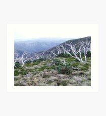 bushfire snowgums II Art Print