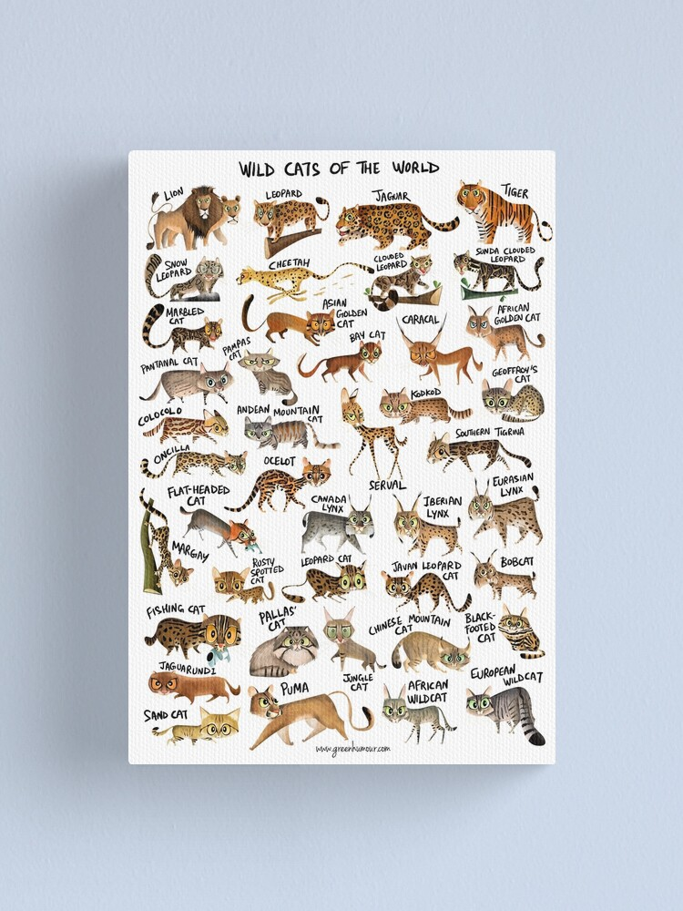 Alternate view of Wild Cats of the World Canvas Print