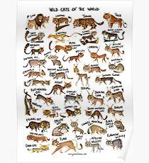 Póster Gatos salvajes del mundo