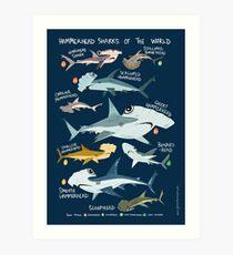 Hammerhead Sharks of the World Art Print