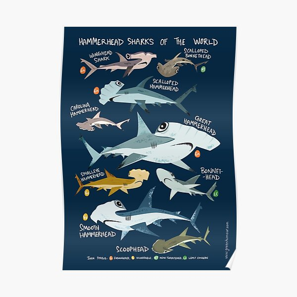 Hammerhead Sharks of the World Poster