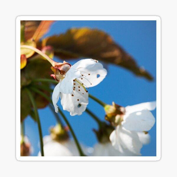 Spring blossoms 1 Sticker