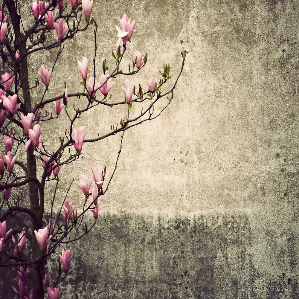 _ magnolia _ by Louise LeGresley