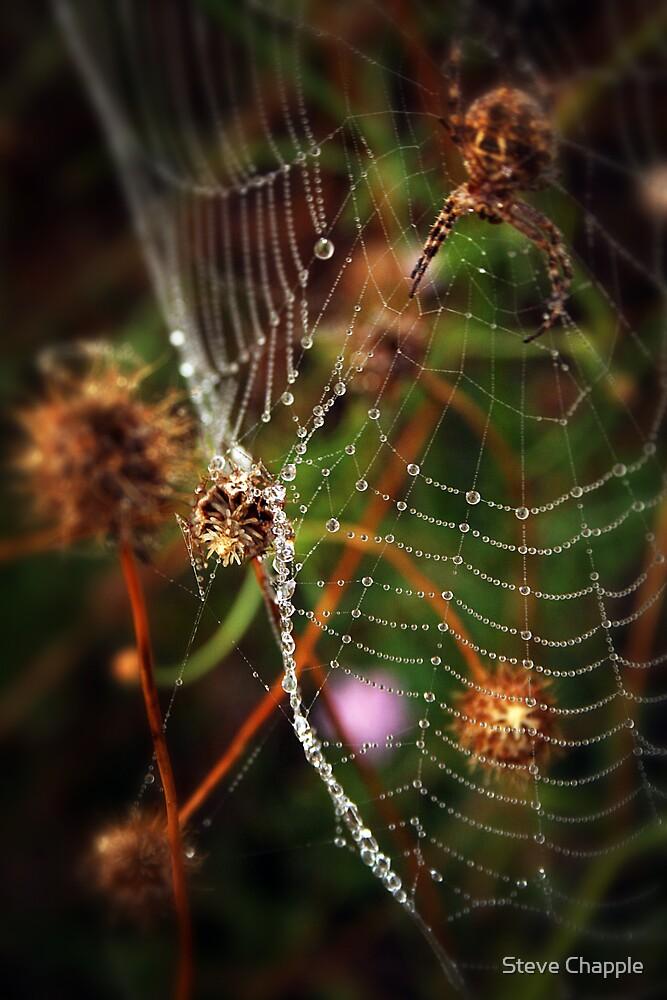 Diamond drops by Steve Chapple