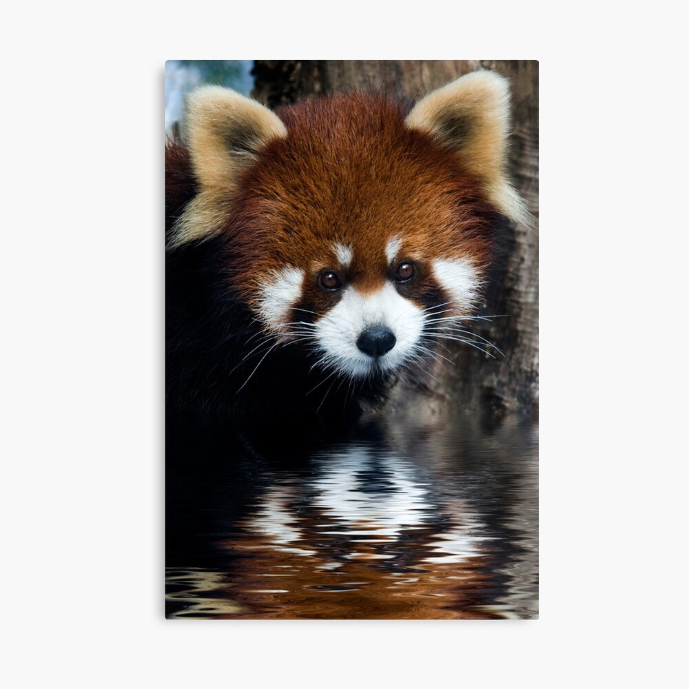 Early Morning Drink Canvas Print