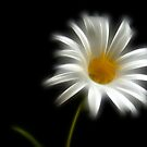 Fractalius Daisy by Jeremy Owen