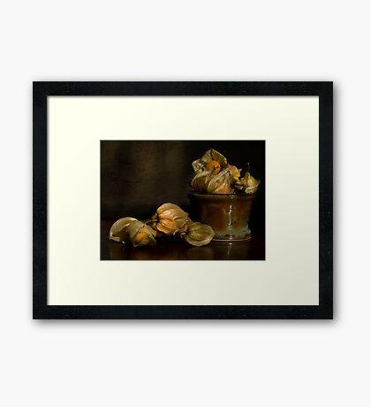 Cape Gooseberries Framed Print