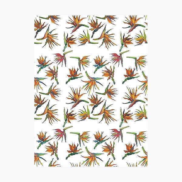 Bird of Paradise Pattern Photographic Print