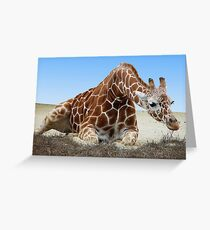RECUMBENT GIRAFFE Greeting Card