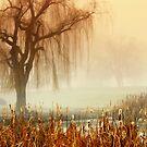 Calm in the fog by Cricket Jones
