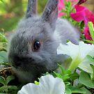 Blossoming Bunny Rabbit von Michael John