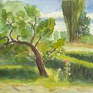 Quince tree in LüttenOrt - Usedom by Jens-Uwe Friedrich