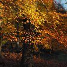 Autumn Tree by Ann Garrett