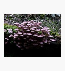 Pinks in the Forest Photographic Print