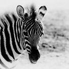 Zebra Portrait I by Teresa Zieba