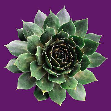 Sharp Green Succulent Plant by juniperdesign